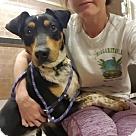 Adopt A Pet :: Reggie aka Rocky (Has Application)