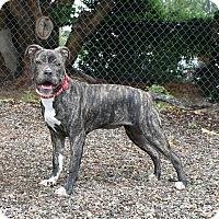 Adopt A Pet :: April - Santa Barbara, CA