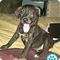 Adopt A Pet :: Penny - Kimberton, PA