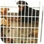 Photo 1 - Golden Retriever Dog for adoption in Harbor City, California - Lancaster Dogs