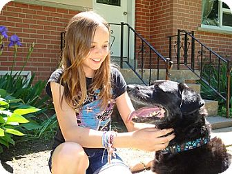 Labrador Retriever Mix Dog for adoption in Hamilton, Ontario - Bruno