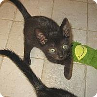 Adopt A Pet :: SMOKEY-2012 - Hamilton, NJ