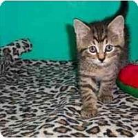 Adopt A Pet :: Cheetah - Secaucus, NJ