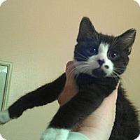 Adopt A Pet :: Skye - Pittstown, NJ