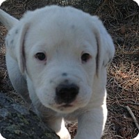 Adopt A Pet :: Vector - Denver, CO