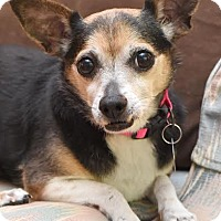 Adopt A Pet :: Lily - Hagerstown, MD