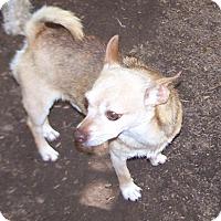 Adopt A Pet :: Tuff - Greensboro, GA