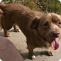 Adopt A Pet :: FUZZY - Georgetown, KY