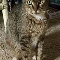 Adopt A Pet :: BOODLE - Pt. Richmond, CA