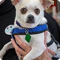 Adopt A Pet :: Ferb - Clarkston, MI