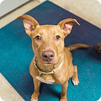 Adopt A Pet :: Ginger - Seville, OH