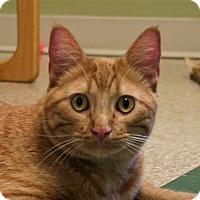 Adopt A Pet :: Marshall - Hastings, NE