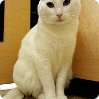Adopt A Pet :: Kitty Kane - Trenton, NJ