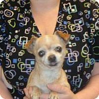 Adopt A Pet :: Nancy - Wildomar, CA