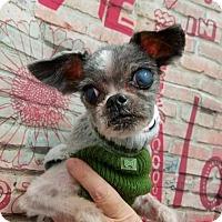 Adopt A Pet :: Miles - Plainfield, IL