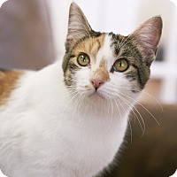 Adopt A Pet :: MJ - Knoxville, TN