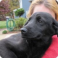 Adopt A Pet :: Cinderella - South Jersey, NJ