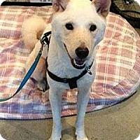 Adopt A Pet :: Bailey - West New York, NJ