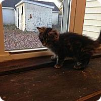 Adopt A Pet :: Kitty - Lancaster, MA