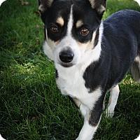 Adopt A Pet :: Dante - Broomfield, CO
