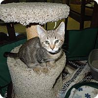 Adopt A Pet :: Roo - Medina, OH