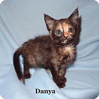 Adopt A Pet :: Danya - Bentonville, AR