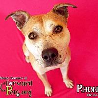 Adopt A Pet :: Rhonda - Sharon Center, OH