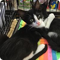 Adopt A Pet :: Dory - Gilbert, AZ