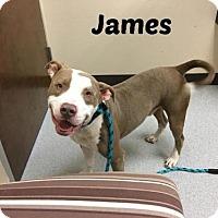 Adopt A Pet :: James - Houston, TX