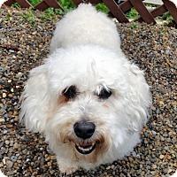 Adopt A Pet :: Liam - Portland, OR
