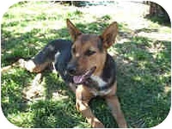 German Shepherd Dog/German Shepherd Dog Mix Dog for adoption in West Los Angeles, California - Roxana
