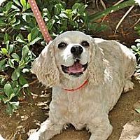 Adopt A Pet :: Sarah - Mission Viejo, CA