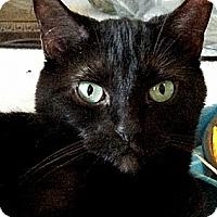 Adopt A Pet :: Mocha - Alexandria, VA