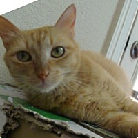 Adopt A Pet :: RHIANNON - League City, TX