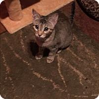 Adopt A Pet :: Reba - Scottsdale, AZ