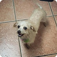 Adopt A Pet :: Phoebe - Davie, FL