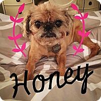 Adopt A Pet :: HONEY - Adoption Pending - Austin, TX