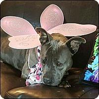 Adopt A Pet :: Gigi - Oakland Gardens, NY