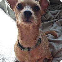 Adopt A Pet :: Spring - Dayton, OH