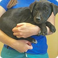 Adopt A Pet :: Nora - Sparta, NJ