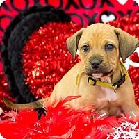 Adopt A Pet :: Grumpy - Lexington, TN