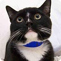 Adopt A Pet :: Manalo - Fairfax, VA