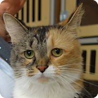 Adopt A Pet :: Patches - Greenfield, IN