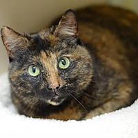 Adopt A Pet :: Lil' Momma170293 - Atlanta, GA