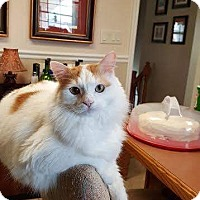 Adopt A Pet :: Pip - Dalton, GA