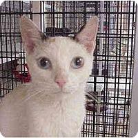 Adopt A Pet :: Ling - Deerfield Beach, FL
