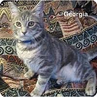 Adopt A Pet :: Georgia - Portland, OR