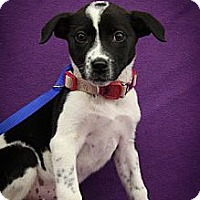 Adopt A Pet :: Gamma - Broomfield, CO