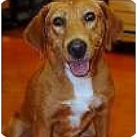 Adopt A Pet :: Aimee -Courtesy Post - New Boston, NH