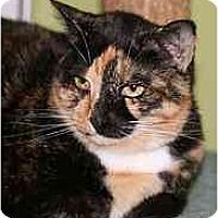 Adopt A Pet :: Mickie - Marietta, GA